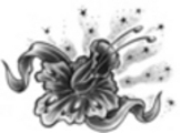 Thumbnail Tattoo flash - Narcissus with stars