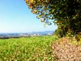 Thumbnail Bildersammlung: Saarland im Herbst