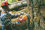 Thumbnail How to Work With A Chainsaw