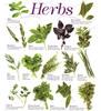 Thumbnail Herbs, Herbal Medicine, Cures Garden Complete 43 Book Series