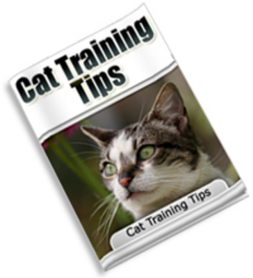 Pay for Cat Training Tips MRR