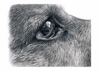 Thumbnail How to draw dogs eyes in Graphite Pencil
