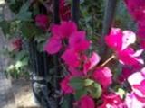Thumbnail Flores junto a la cancela del parque Genovés