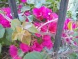 Thumbnail Flores junto a la cancela del parque Genovés-2