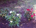 Thumbnail Flores en el parque Genovés