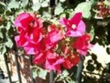 Thumbnail Flores junto a la cancela del parque Genovés-4