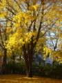Thumbnail Fall Tree Leaves