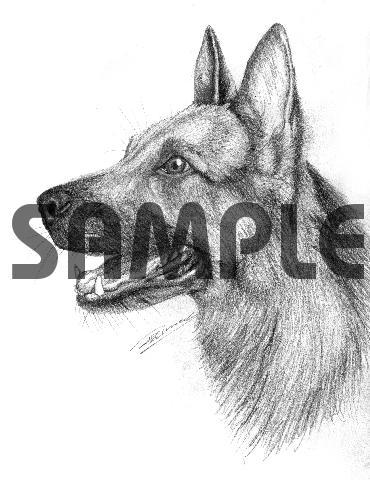 Pay for GERMAN SHEPHERD dog pencil drawing 300dpi