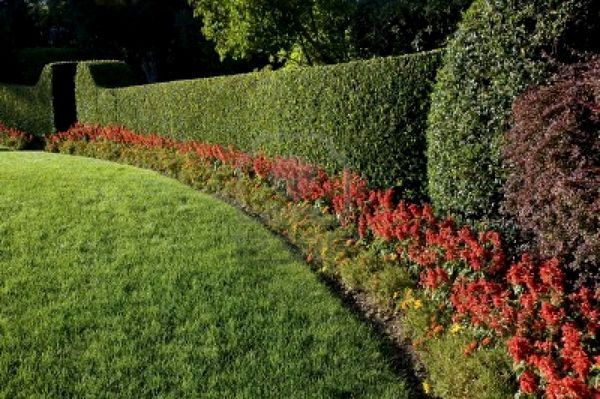 Pay for Discover The Simple and Easy Way of Caring for Your Lawn