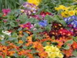 Thumbnail Garten