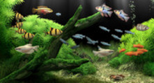Thumbnail Dream Aquarium Screensaver