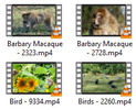 Thumbnail Animals 4K Stock video clips - vol 1