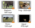 Thumbnail Animals 4K Stock video clips - vol 3