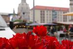 Thumbnail Dresden Altmarkt - Dresden Old Market Place