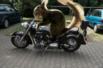 Thumbnail Squirrel on motorcycle - Eichhörnchen auf Motorrad