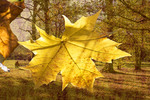 Thumbnail Pseudo painting maple leaf in autumn