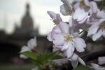 Thumbnail spring in Dresden