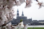 Thumbnail cherry blossoms and Hofkirche Dresden