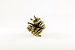 Thumbnail Pine cone