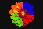 Thumbnail four colors of dahlia