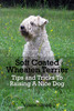 Thumbnail Soft Coated Wheaten Terrier Tips and Tricks To Raising A Nic