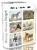 Vintage Horses Images 800