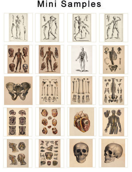 Pay for The Human Anatomy Vintage Images over 1,300 Images