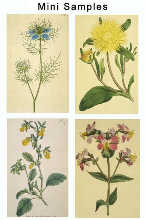 Pay for Vintage Floral Images 1,000