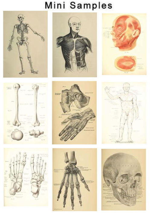Pay for The Human Anatomy Vintage Images HQ 609