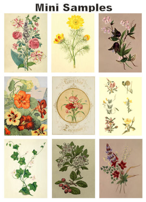 Pay for All about Floral & Flowers vintage PDF books