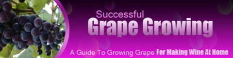 Thumbnail Grape Growing Website Template - WP Themes PLR Pack