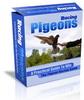 Thumbnail Racing Pigeons Website Template Plr Pack - Homing Pigeons