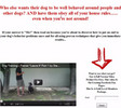 Thumbnail Video Squeeze Page Software Master Resale and Giveaway Right