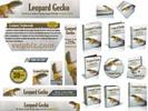 Thumbnail Leopard Gecko Website Template Plr Pack