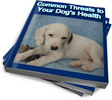 Thumbnail Common Threats to Your Dogs Health PLR Reports
