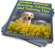 Thumbnail Golden Retriever Breeding, Adopting and Training Tips (PLR)