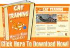 Thumbnail Cat Training Niche Wordpress Blog