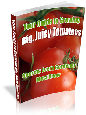 Pay for Your Guide To Growing Big, Juicy Tomatoes: Secrets Every Gardener Must Know!