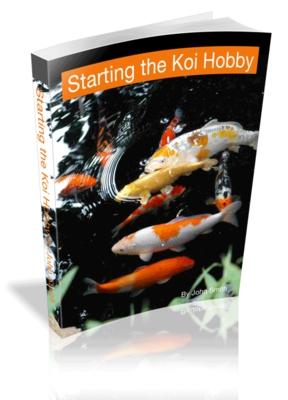 Starting the koi hobby amazing koi pond care system for Starting a koi pond