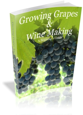 Pay for Growing Grapes and Wine Making: A Beginners Guide
