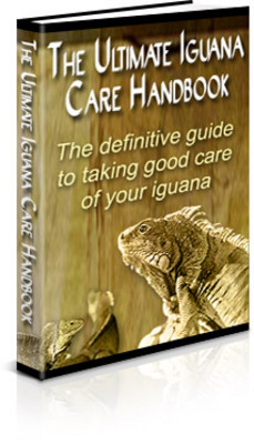 Pay for (Unrestricted PLR) The Ultimate Iguana Care Handbook Plr Ebook