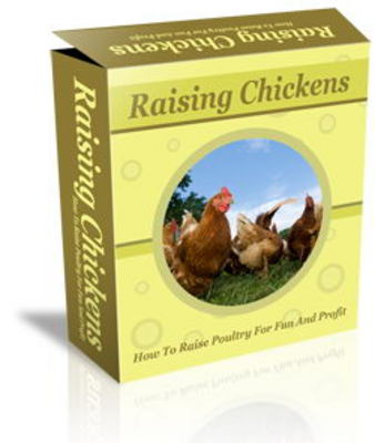 Pay for Raising Chickens Website Template Plr Pack - Raising Poultry