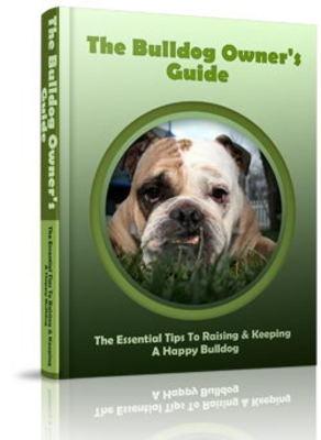 Pay for Bulldog Website Template Plr Pack