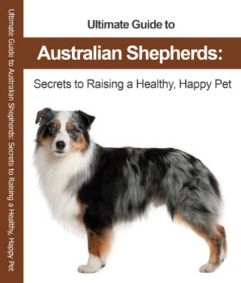 Pay for The Ultimate Guide to the Australian Shepherd  - Dog Breeds