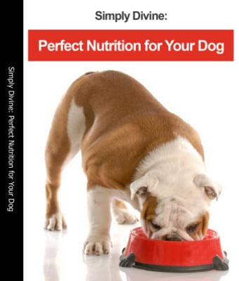Pay for Dog Food Recipes - Discovering Perfect Nutrition for Your Dog