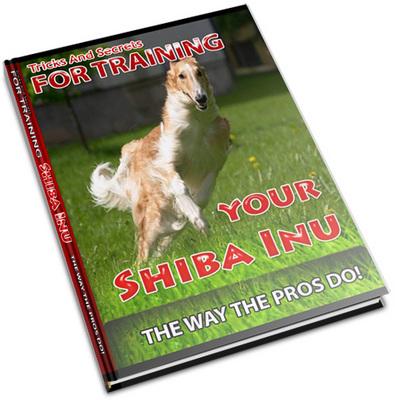 Pay for Shiba Inu Secrets - How To Keep Your Shiba Inu Healthy