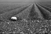Thumbnail Plough Lines in a Field