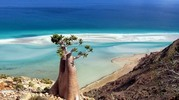 Thumbnail Beaches & Plants of exceptional natural reserve in the world