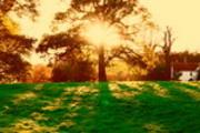 Thumbnail Through the Tree