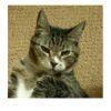 Thumbnail Meow